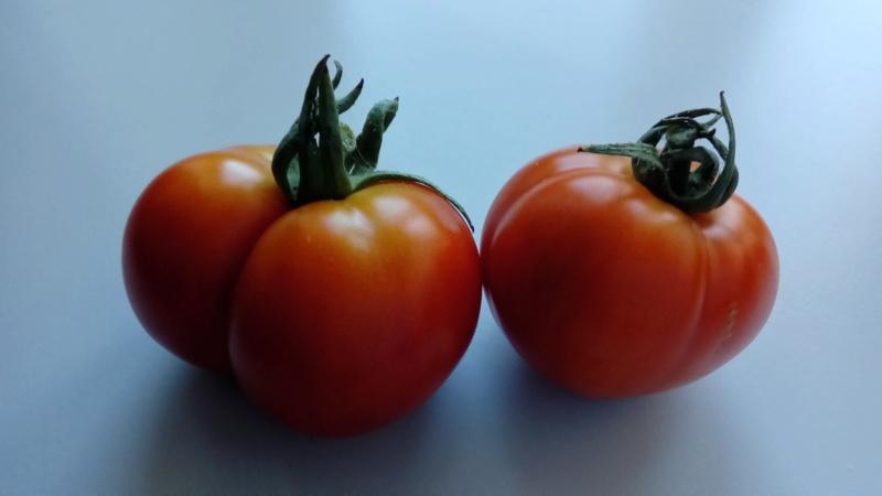 Tomates 2019 et 2020 - Page 17 P_202467