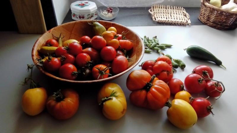 Tomates 2019 et 2020 - Page 19 P_202676
