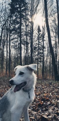 Alaska - femelle - Târgu Frumos - réservé adoption (68) 20190318