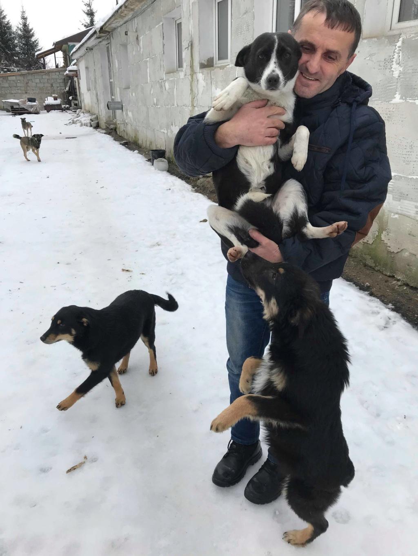 Dixie - femelle - chez Andreea à Târgu Frumos - réservée adoption (67) 48364610