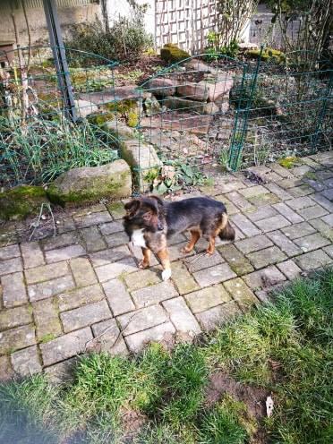 Mielle (ex-Sansa) - femelle - Târgu Frumos - adoptée (68) 51933210