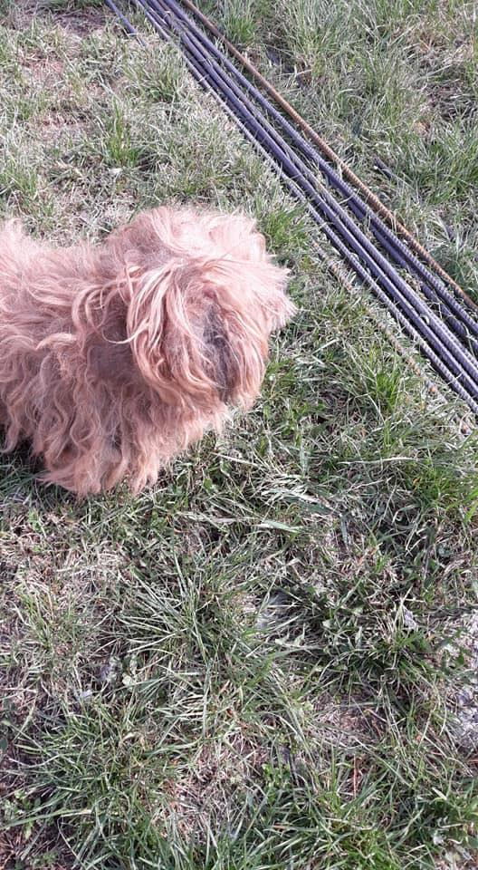 Shagman - mâle - en FA à Târgu Frumos - réservée adoption 68 56681810