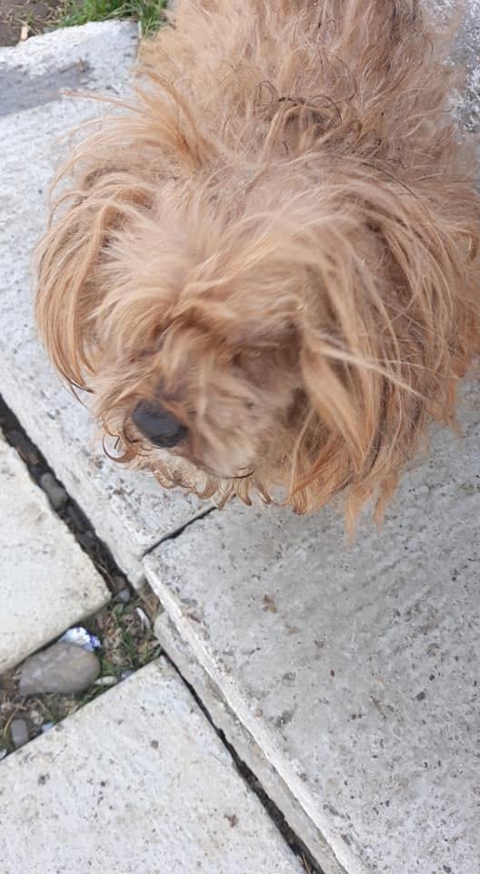 Shagman - mâle - en FA à Târgu Frumos - réservée adoption 68 56931910