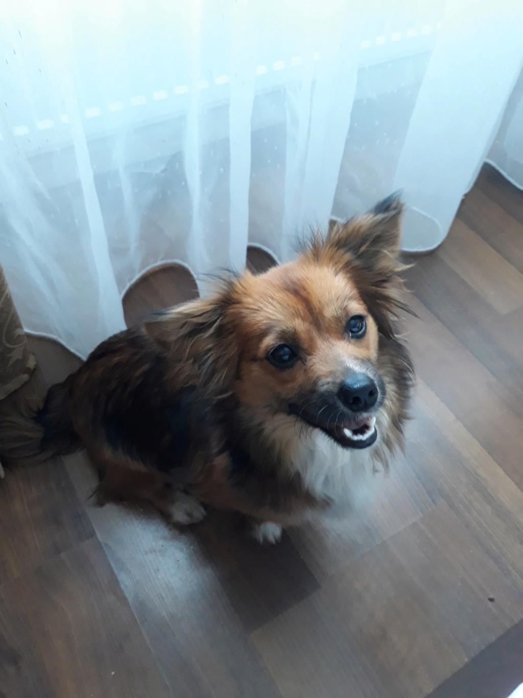 Prunelle (ex Samia) - femelle - en FA à Târgu Frumos - Réservée adoption (Suisse) 57882610
