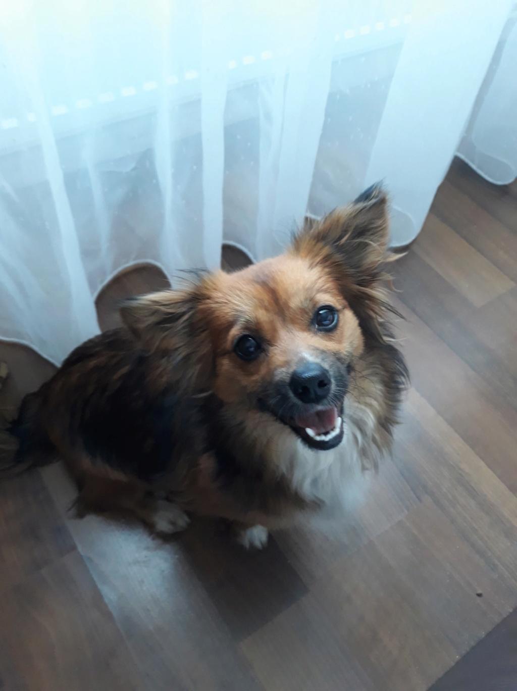 Prunelle (ex Samia) - femelle - en FA à Târgu Frumos - Réservée adoption (Suisse) 58375810