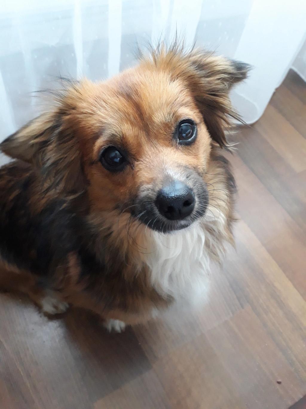 Prunelle (ex Samia) - femelle - en FA à Târgu Frumos - Réservée adoption (Suisse) 58382110