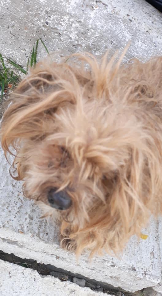 Shagman - mâle - en FA à Târgu Frumos - réservée adoption 68 58460810