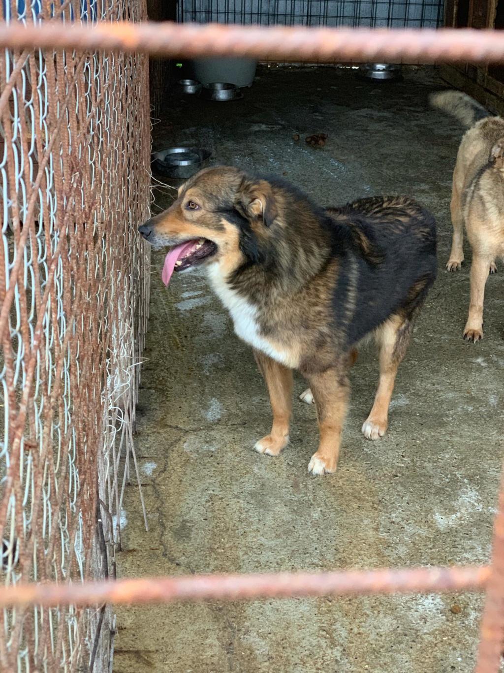 Diago (ex-Gatsby) - mâle - fourrière de Târgu Frumos - Réservé adoption (54) 59455710
