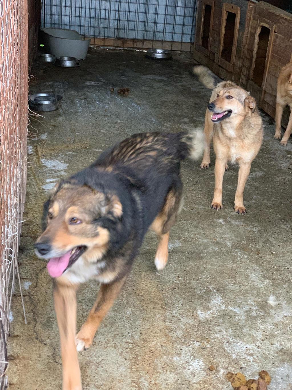 Gatsby - mâle - fourrière de Târgu Frumos - Réservé adoption (54) 59885610