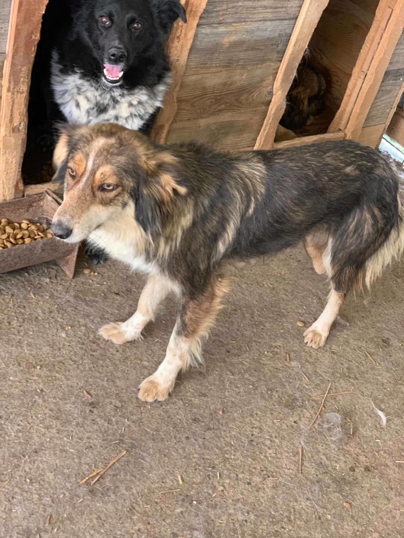 HopAlong - femelle - fourrière de Târgu Frumos - frais d'adoption réduits 60709010