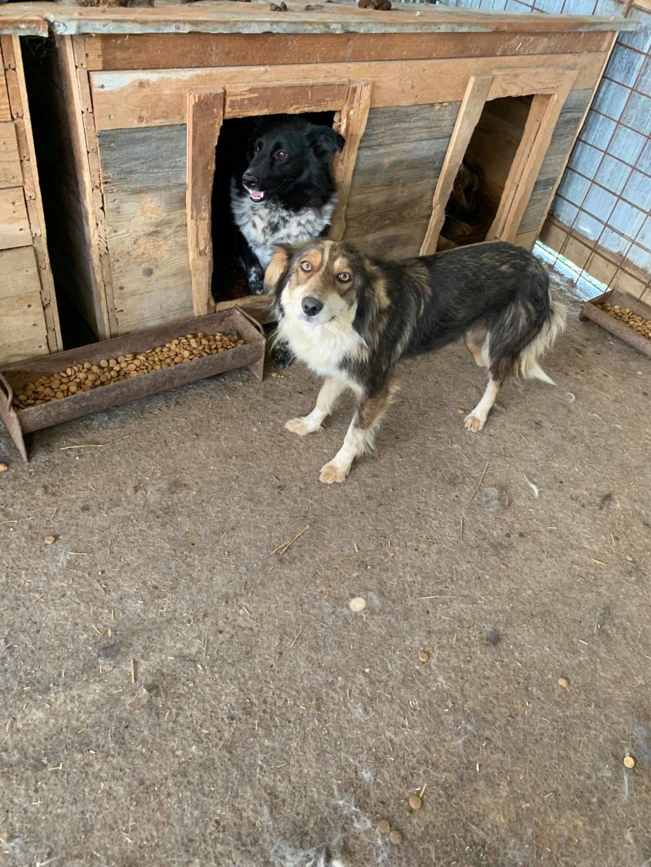 HopAlong - femelle - fourrière de Târgu Frumos - frais d'adoption réduits 60788110