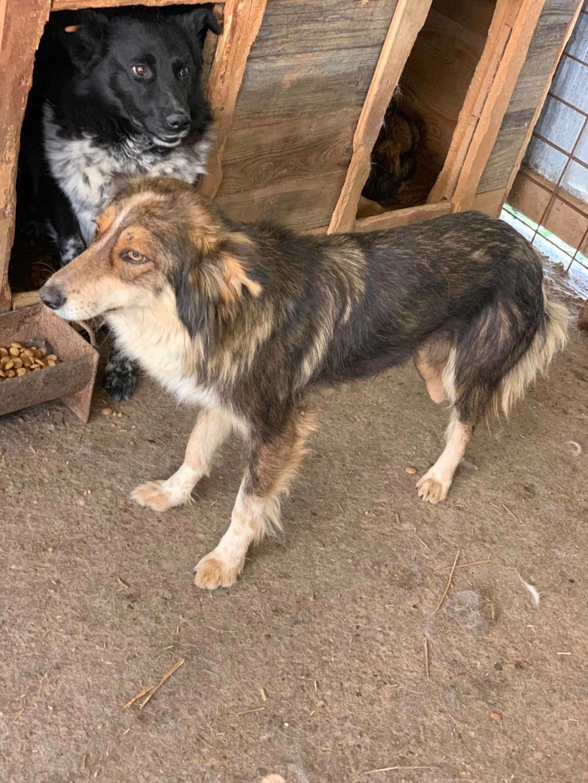 HopAlong - femelle - fourrière de Târgu Frumos - frais d'adoption réduits 61018710