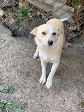Nesta (ex-Asia) - femelle- Fourrière de Târgu Frumos - réservée adoption (68) 61105611