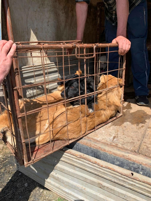 La fourrière communale de Târgu Frumos 61193010