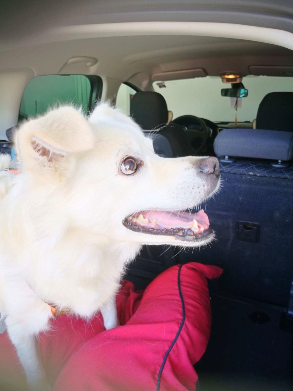 Malakaï (aka Malik)  - chien mâle - En FA dans le 68  62239210