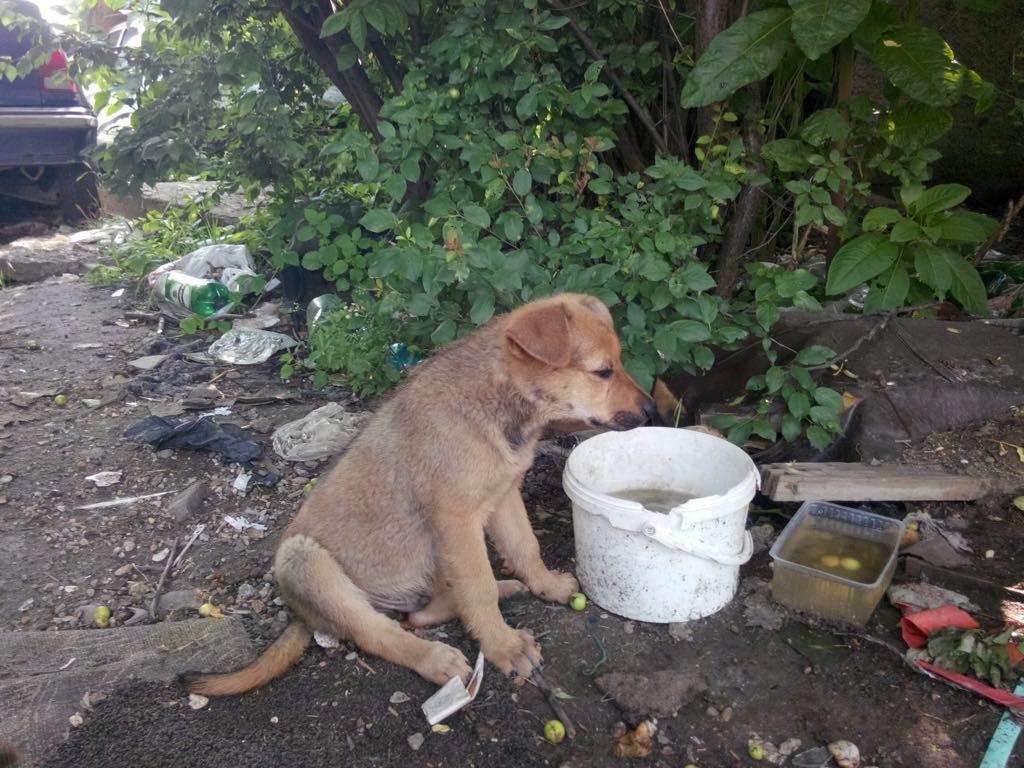 Ralphie - mâle - refuge d'Arad 64872010