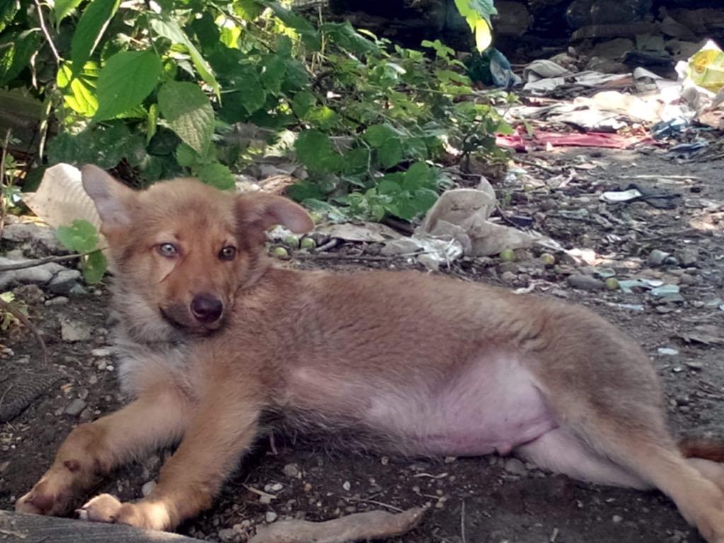 Ralphie - mâle - refuge d'Arad 64879410