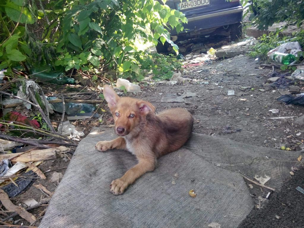 Ralphie - mâle - refuge d'Arad 65051810