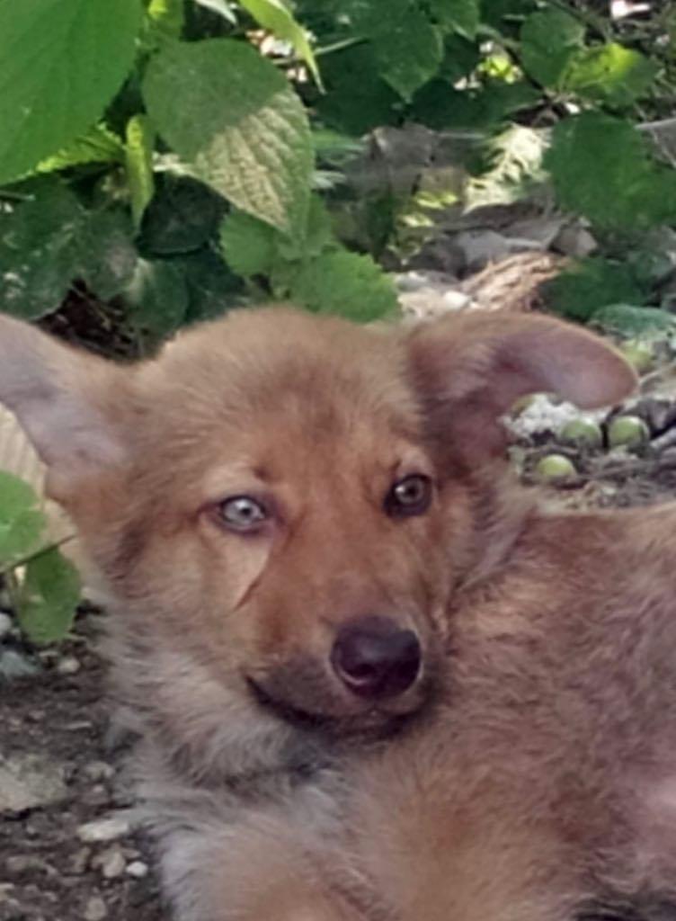 Ralphie - mâle - refuge d'Arad 65394810