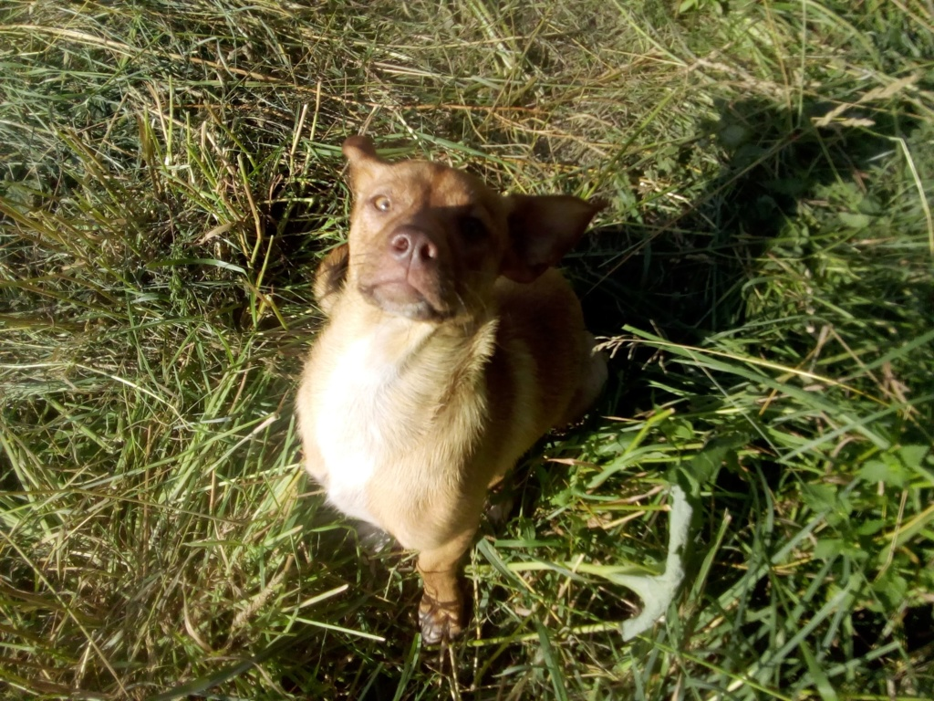 Star - mâle - chez Andreea à Târgu Frumos 66033410