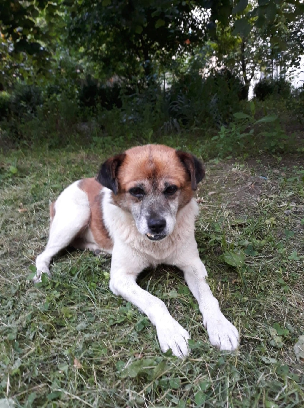 Pépère - mâle - à la rue Târgu Frumos - frais d'adoption réduit - adopté via Andreea 66222410