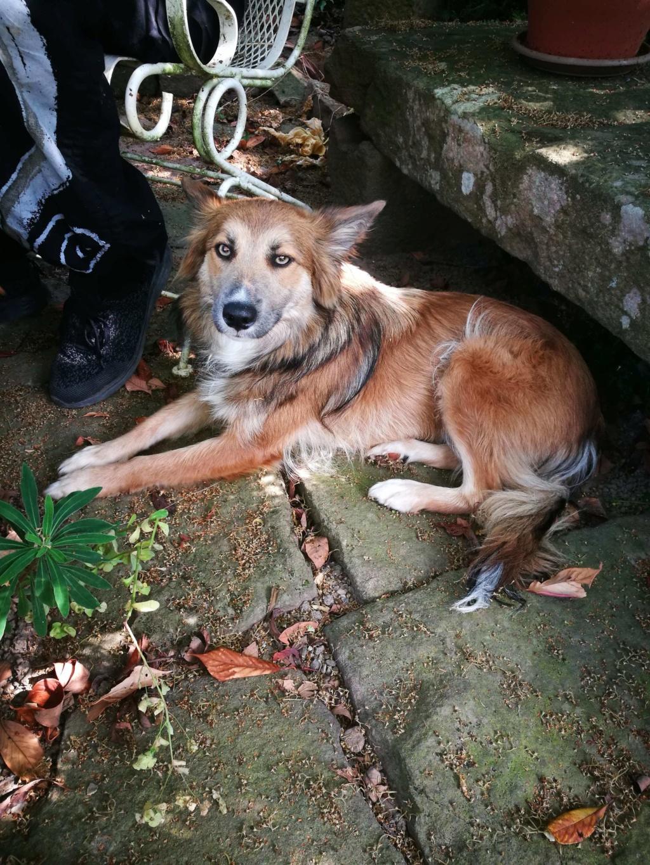 Ohmnia (ex-Zoey) - femelle - refuge d'Arad - réservée adoption (68) 66256010