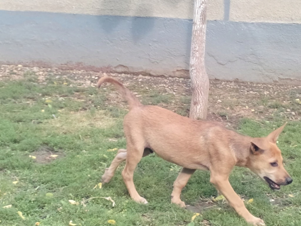 Rambo - mâle - refuge d'Arad - sera en famille d'accueil dans le 67 le 14 septembre 66346110