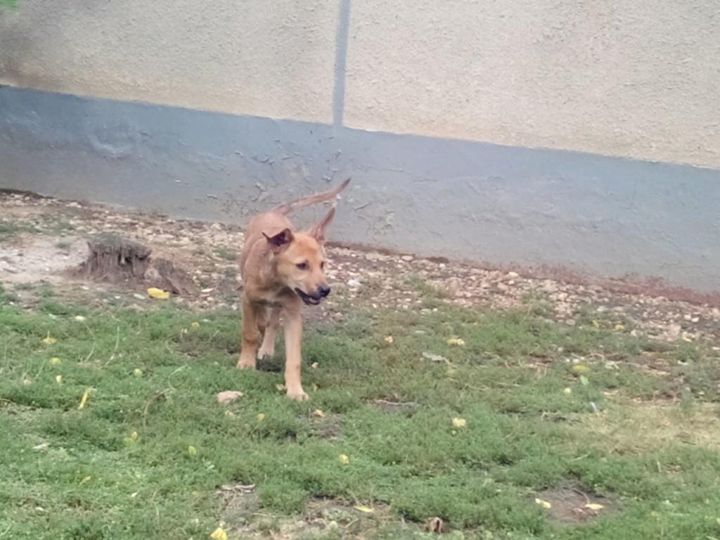 Rambo - mâle - refuge d'Arad - sera en famille d'accueil dans le 67 le 14 septembre 66431010