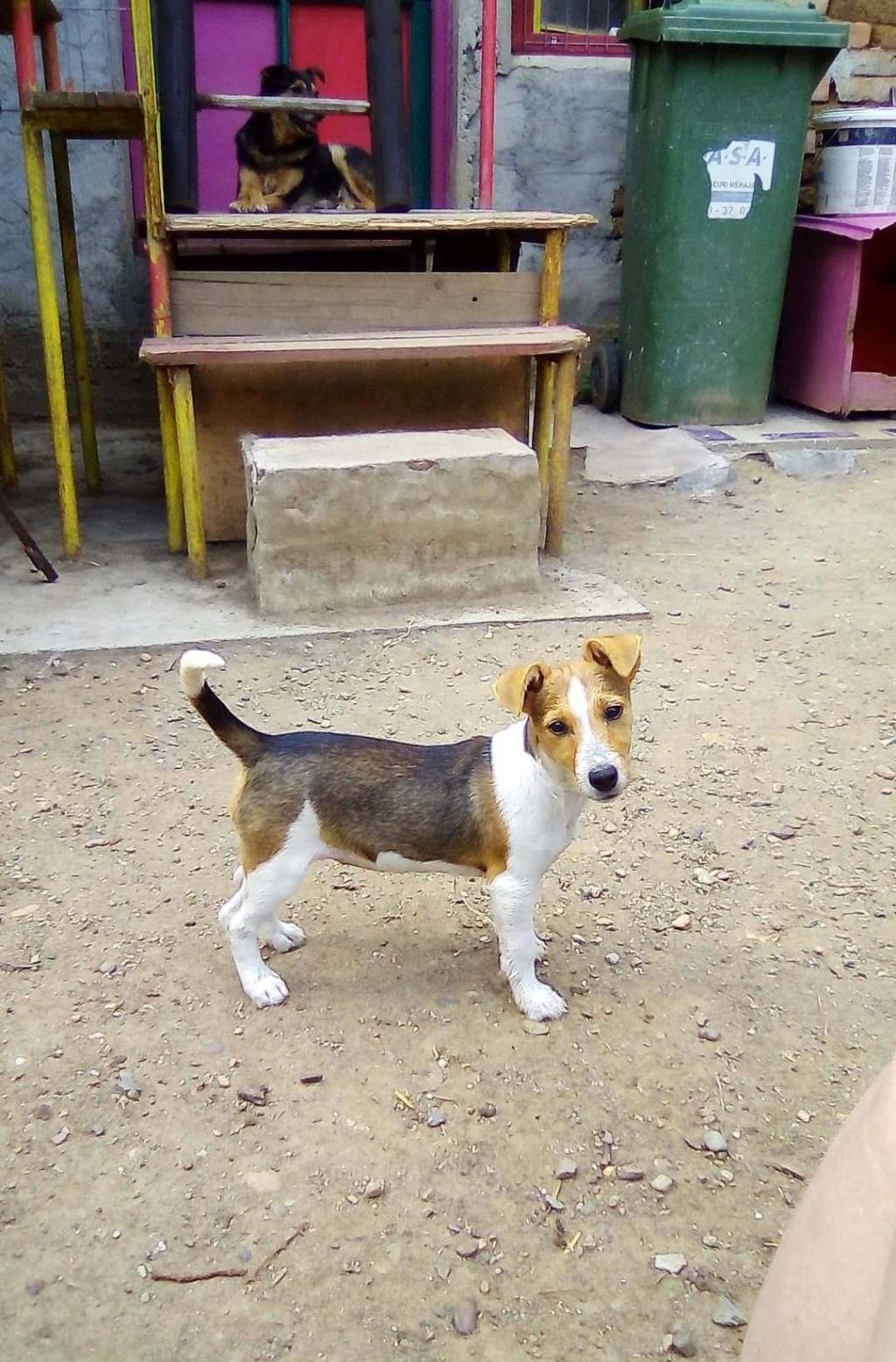 Plume (ex-Jackie) - femelle - refuge d'Arad - réservée adoption (67) 66443210