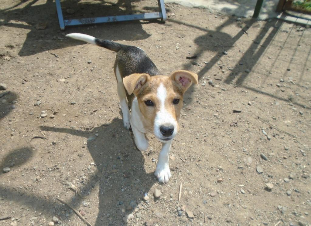 Jackie - femelle - refuge d'Arad - Reservée adoption 70 66444610