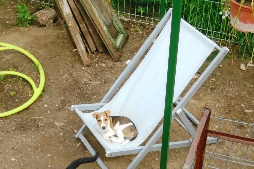 Jackie - femelle - refuge d'Arad - Reservée adoption 70 66453210