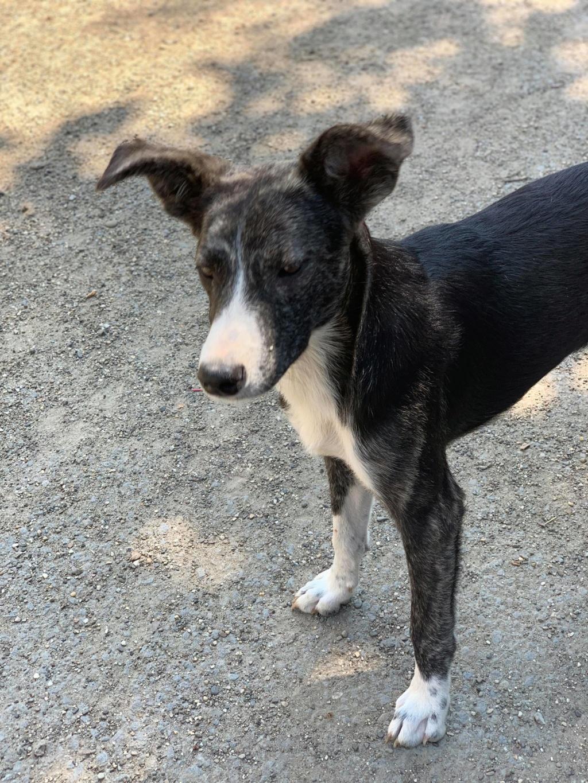 Humphrey - mâle - fourrière de Târgu Frumos 66460710
