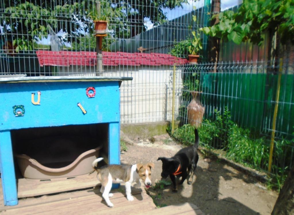 Plume (ex-Jackie) - femelle - refuge d'Arad - réservée adoption (67) 66462010