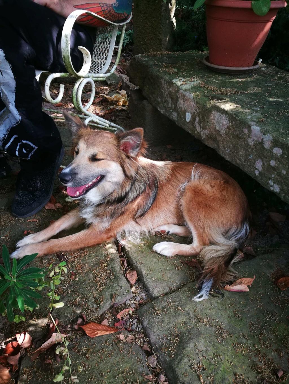 Ohmnia (ex-Zoey) - femelle - refuge d'Arad - réservée adoption (68) 66494810
