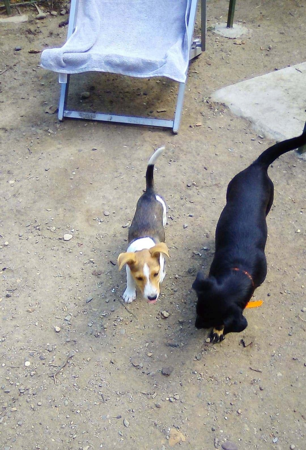 Plume (ex-Jackie) - femelle - refuge d'Arad - réservée adoption (67) 66525010