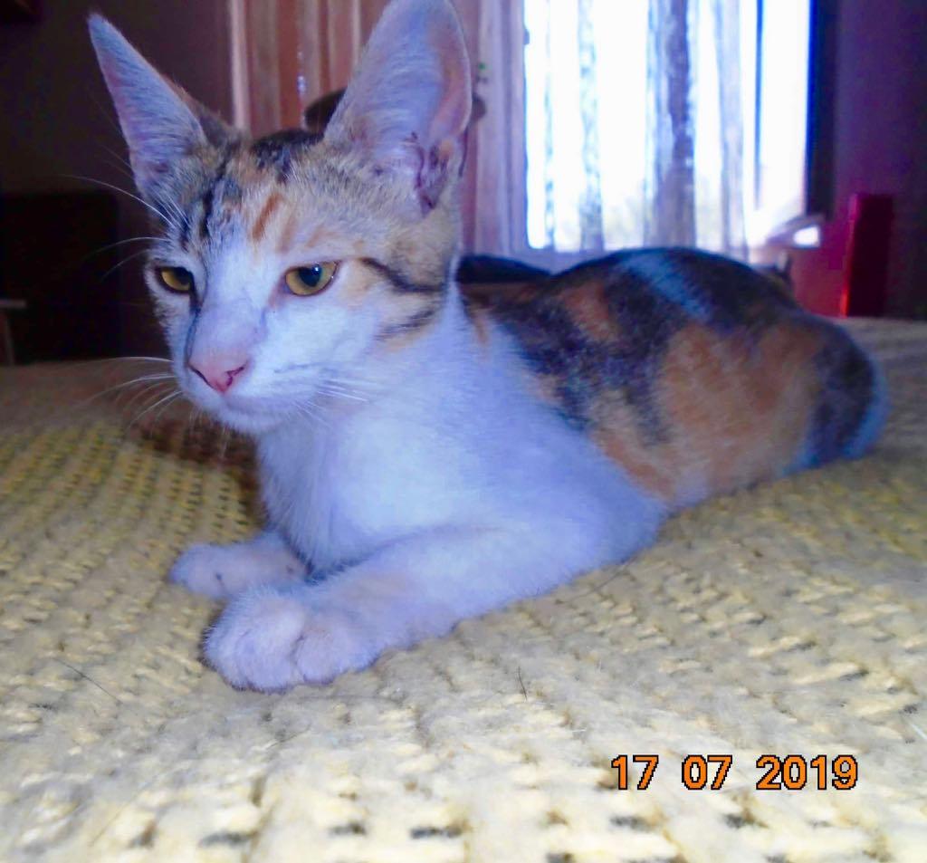 Yuna- chat - femelle- refuge d'Arad 66672210