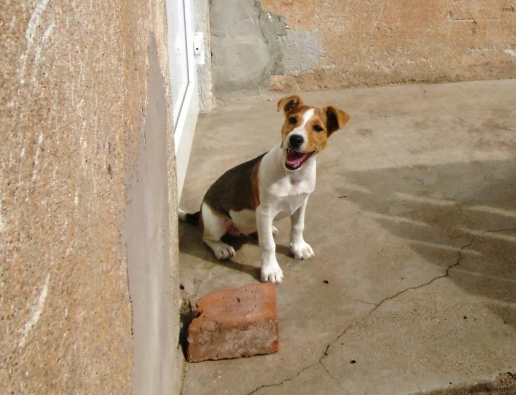 Plume (ex-Jackie) - femelle - refuge d'Arad - réservée adoption (67) 66675510