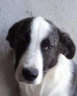 Lola - femelle - refuge d'Arad - réservée adoption (67) - réservée adoption (67) 66716410