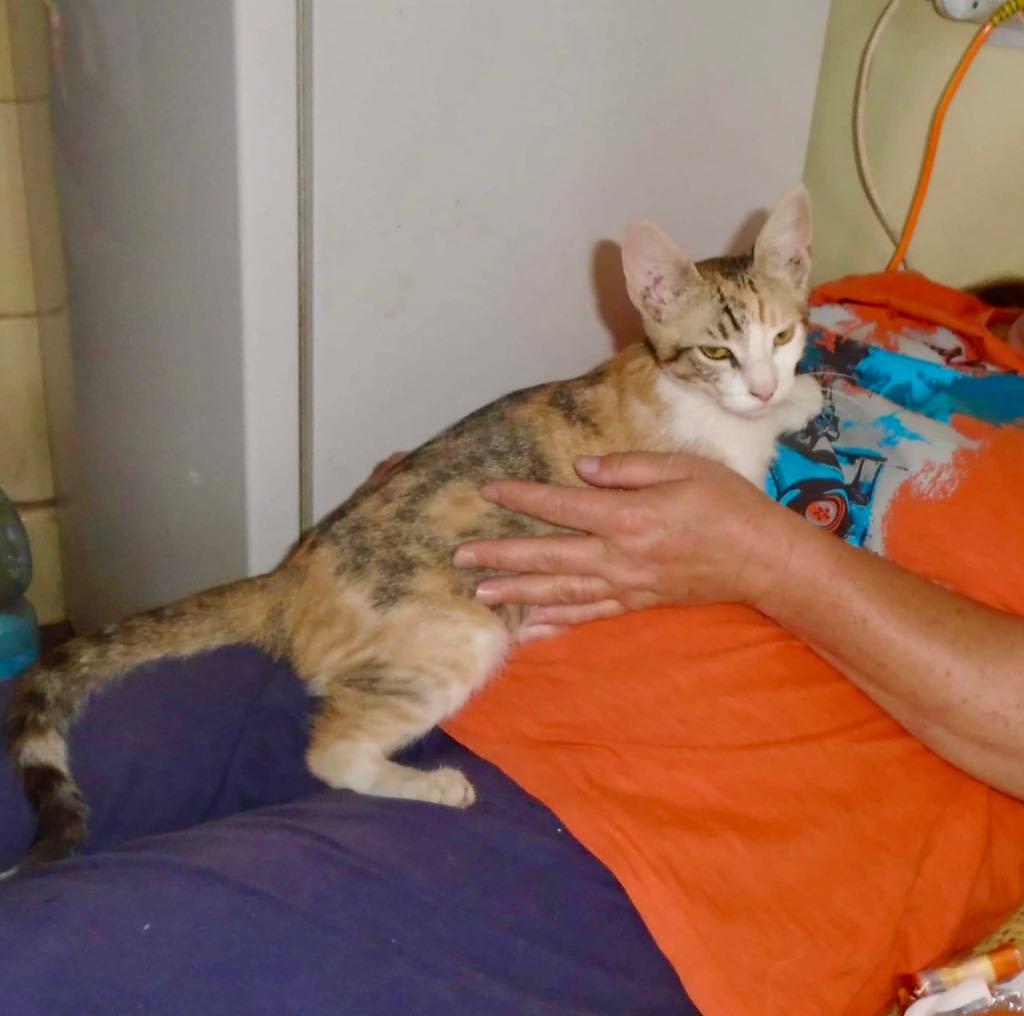 Yuna- chat - femelle- refuge d'Arad 66756510