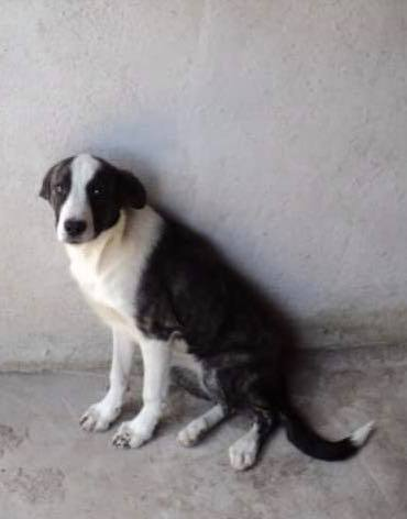 Lola - femelle - refuge d'Arad 66794810