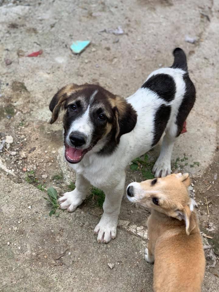 Fletcher - mâle - fourrière de Târgu Frumos - réservé adoption Hollande 66801010