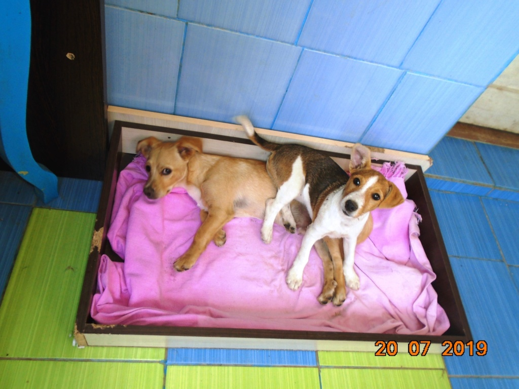 Plume (ex-Jackie) - femelle - refuge d'Arad - réservée adoption (67) 66857611