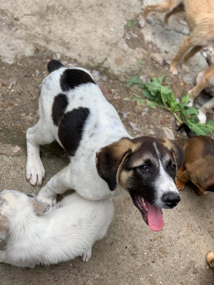Fletcher - mâle - fourrière de Târgu Frumos - réservé adoption Hollande 67240410