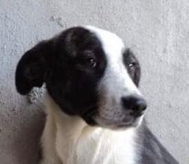 Lola - femelle - refuge d'Arad - réservée adoption (67) - réservée adoption (67) 67434710