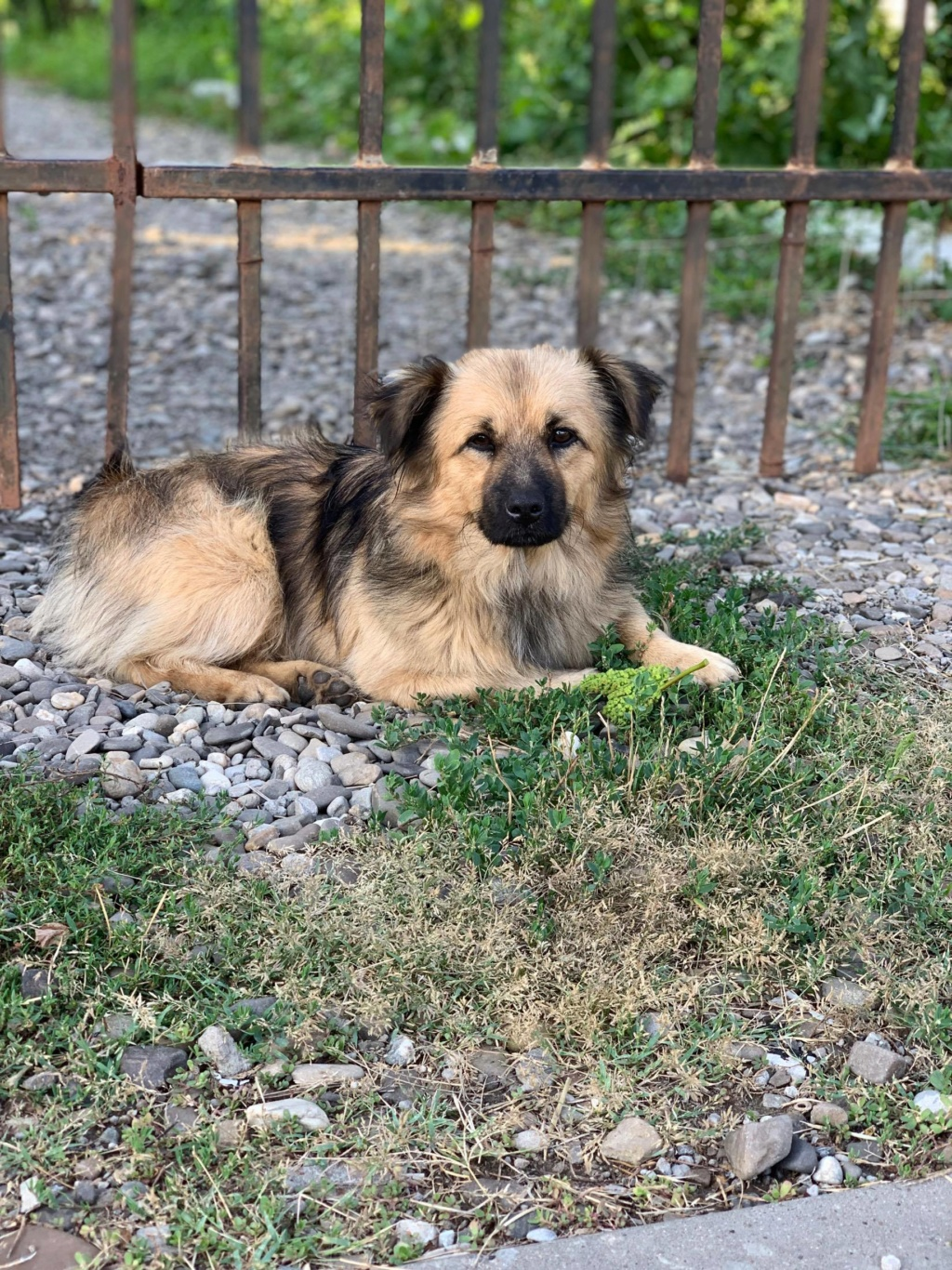 Berlioz - Berlioz - mâle - à la rue Târgu Frumos - adoptée via Andreea 67480610