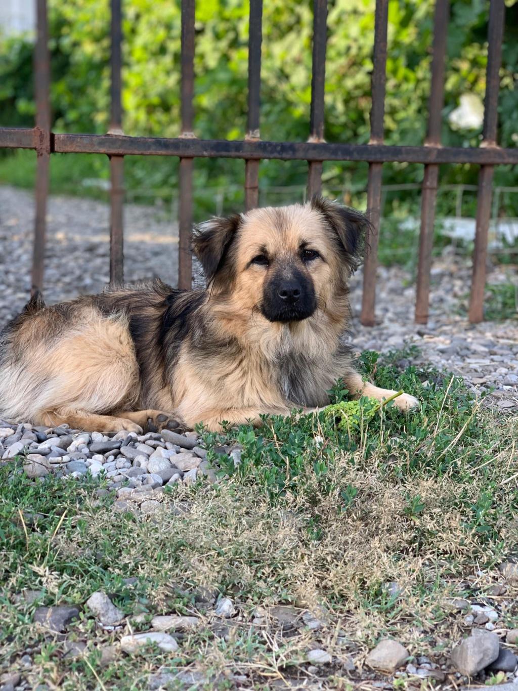 Berlioz - Berlioz - mâle - à la rue Târgu Frumos - adoptée via Andreea 67488310