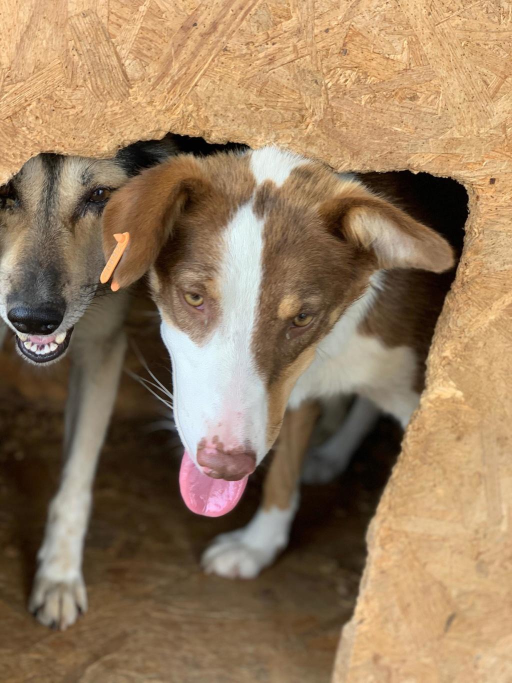 Maya - femelle - fourrière de Târgu Frumos - en famille d'accueil dans le 67 - réservée adoption (68) 67551410
