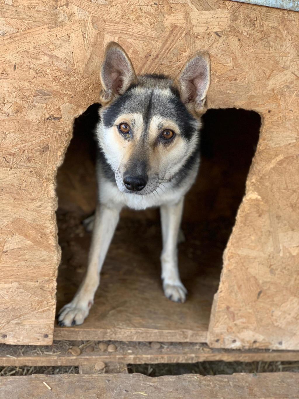 Kodack - mâle - fourrière de Târgu Frumos - réservé adoption 25 67606710