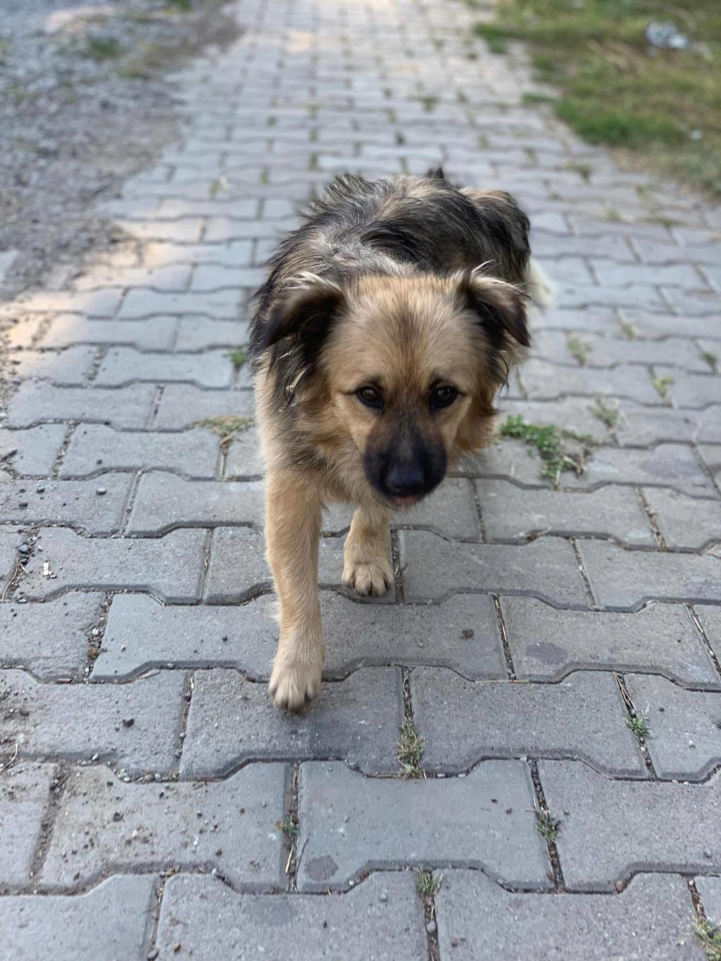 Berlioz - Berlioz - mâle - à la rue Târgu Frumos - adoptée via Andreea 67648410