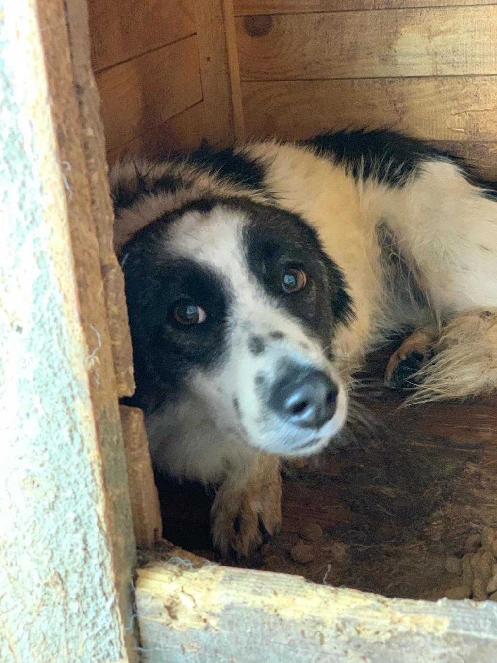 Kona - femelle - fourrière de Târgu Frumos - Réservée adoption (22) 67869810